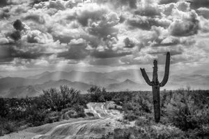 Black and White Photo of Phoenix Arizona Desert